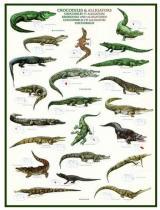 Eurographics Puzzle 1000 Dílků Crocodiles Et Alligators