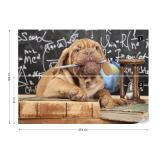 Fototapeta - Puppy Professor Papírová tapeta  - 254x184 cm