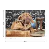 Fototapeta - Puppy Professor Papírová tapeta  - 368x254 cm