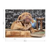 Fototapeta - Puppy Professor Vliesová tapeta  - 208x146 cm