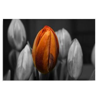 Deco Panel - Orange Tulip 50x40 cm