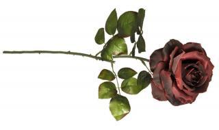 EverGreen Růže, květ 13,5 cm, v. 77 cm B