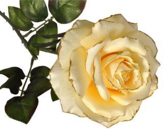EverGreen Růže, květ 13,5 cm, v. 77 cm C
