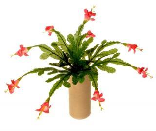 EverGreen Vánoční kaktus pr. 35