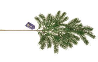 EverGreen Větev smrková d. 65 cm