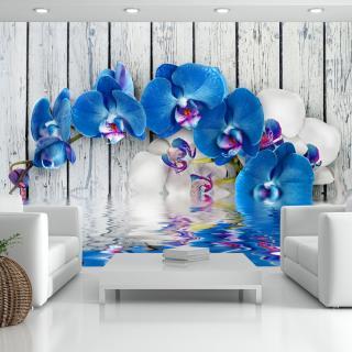 Fototapeta květiny - Cobaltic orchid 250x175 cm